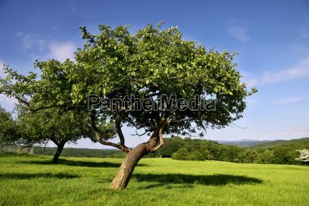 zablakane laki owocow w lecie