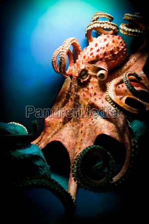 scary giant octopus