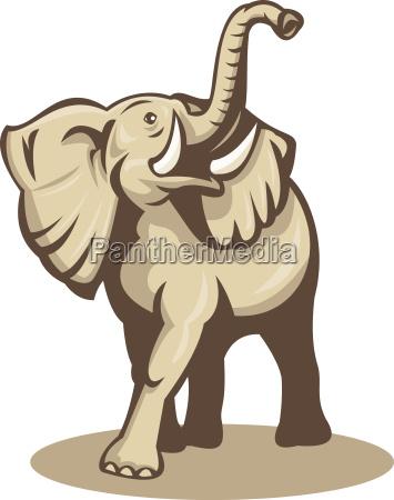 african bull elephant ladowania ataku