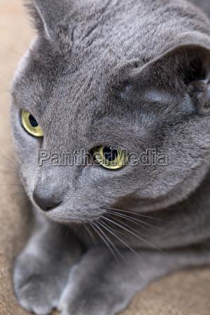 detal portret potrait oko narzadow oczy