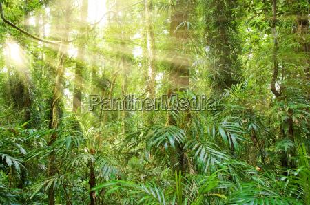 sunlight in dorrigo world heritage rainforest