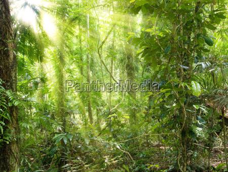 sunshine in rain forest