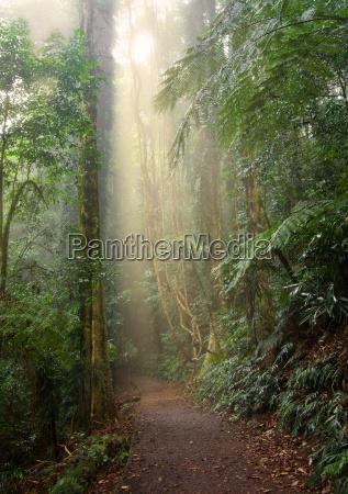 rain forest light