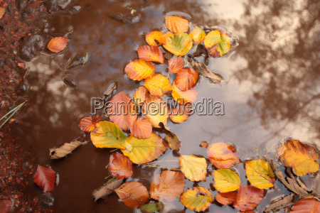 piękna, jesień, w, szkocji - 4388883