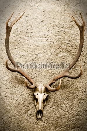 czaszka skrzep trupia czaszka upiorny szkielet