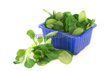 eco biological diet conscious lambs lettuce