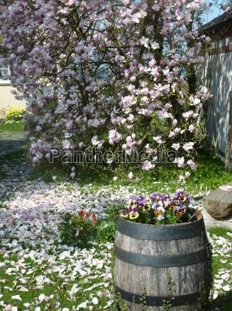 ogrod ogrodek kwiat kwiatek kwiaty kwiatki