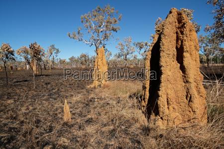 katedra termity kopce australia