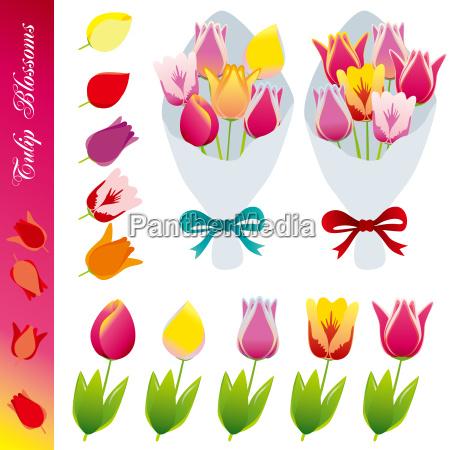 kwiat kwiatek zawod roslina ornament wiosna