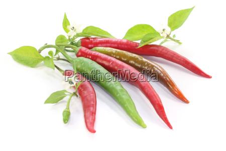 spice bloom blossom flourish flourishing vegetable