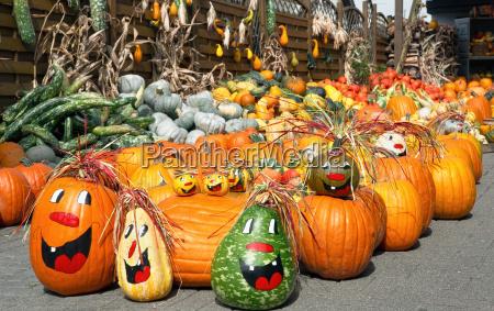 warzywo halloween gospodarstw ferma dynia zbiory