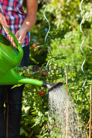 ogrodnictwo w lecie kobieta nalewa rosliny