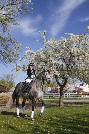 woman skirt ride horse animal pet