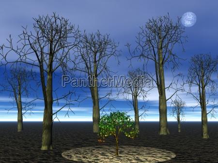 drzewo drzewa noc nocy ilustracja las