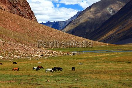 tybet indie gora himalaje hochmoor zanskar