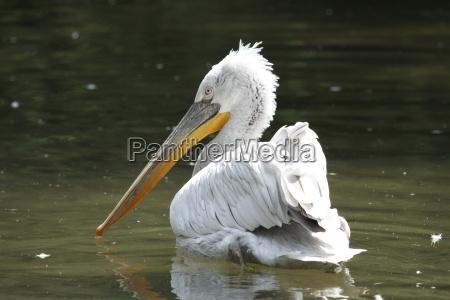 ptak ptaki pioro dziob piora wodnych