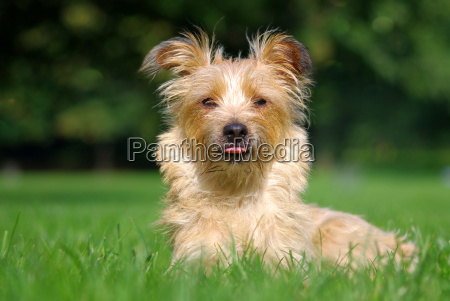 przyroda srodowisko zwierzeta zwierzatka pies psy