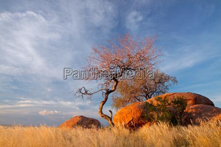 glazy granitowe i drzewa