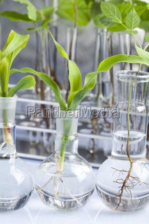 eksperymentowanie z flora w laboratorium