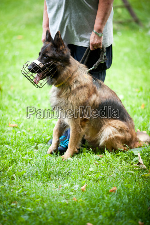 komando zwierze domowe kuscheltier pluszak pies