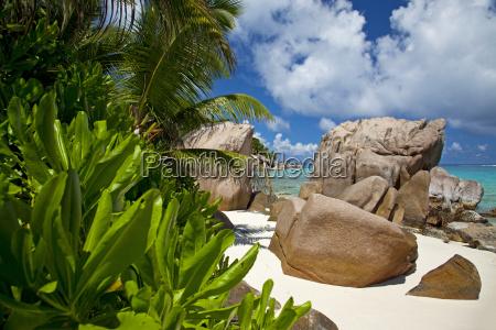 rajskiej plazy z egzotycznymi roslinami