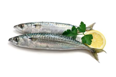 dwie makrela z cytryna