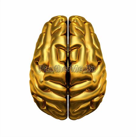 zloty mozg widok z gory