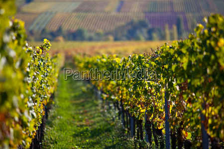 palatyn winnice