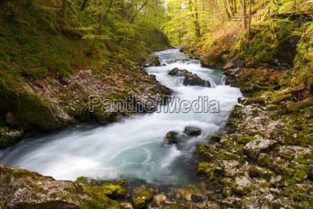 las trawnik puszcza lesnictwo river rzeka