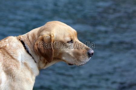 portret potrait pies patrzec widok outlook