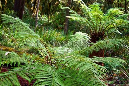 ferns in the rainforest
