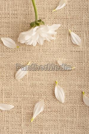 kwiat kwiatek zawod roslina romantyczny platki