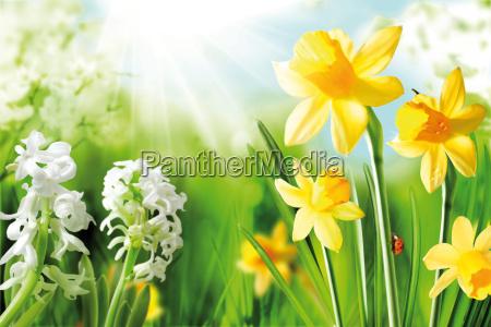 wesoly wiosna zarowki