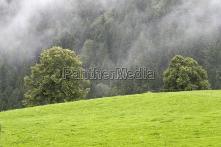 trawnik laka zielen wierzba natura wiezba