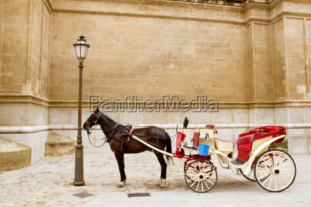 carriage with horse in majorca cathedral
