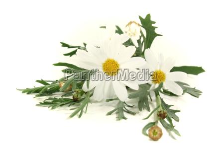 garden flower plant bloom blossom flourish