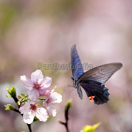 motyl na nice flower