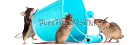 trzy inkwizycyjne myszy