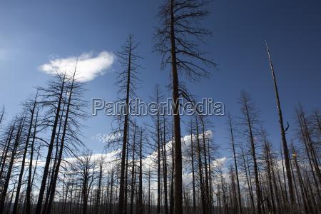 spalony las w parku narodowym bryce