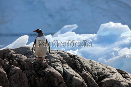 zima zimowy zimno chlod antarktyda lod