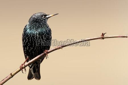 zwierze ptak zwierzeta zwierzatka ptaki zacma