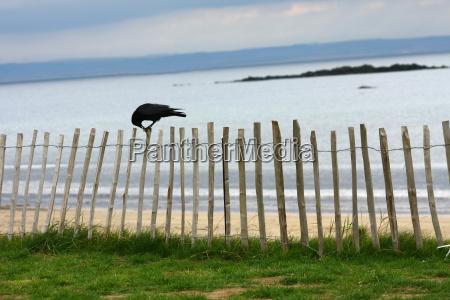 horyzont ptak ptaki wybrzeze szkocja kruk