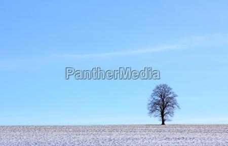 drzewo, zima, zimowy, pole, trawnik, łąka - 8773456