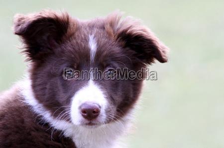 zwierze domowe zwierzeta zwierzatka pies psy
