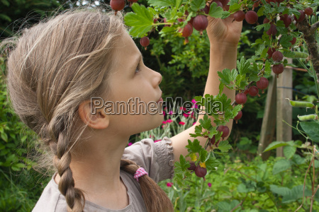 ogrod ogrodek ogrody berry agrest mlody