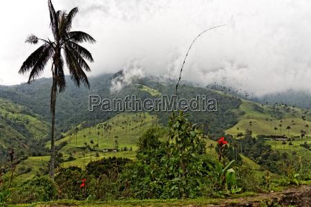 dolina cocora quindio kolumbia