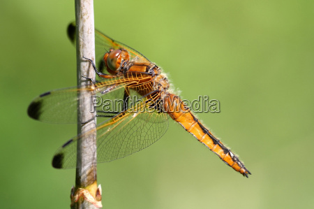 przyroda srodowisko zwierzeta zwierzatka dragonfly wazki