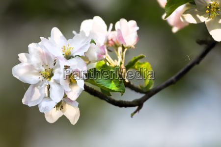 kwiat kwiatek zawod roslina wiosna sunshine