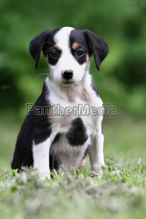 zwierze zwierzeta zwierzatka pies psy szczeniak