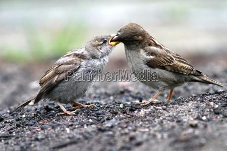 zwierze ptak zwierzeta zwierzatka ptaki wrobel